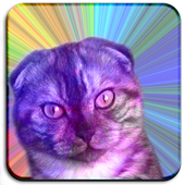 Flying cats icon