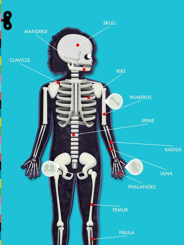 Der menschliche Körper für Android - APK herunterladen