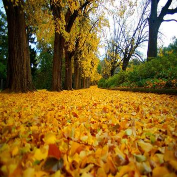 Autumn Leaves Live Wallpapers apk screenshot
