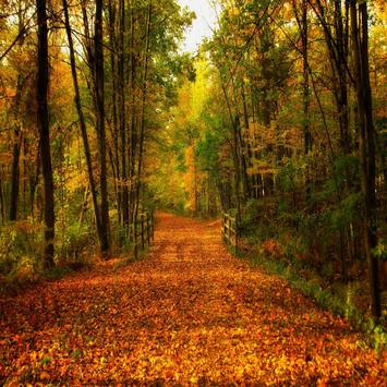 Autumn Leaves Live Wallpapers screenshot 7