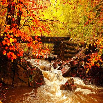 Autumn Leaves Live Wallpapers screenshot 8