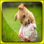 Dog Puppy Live Wallpapers icon