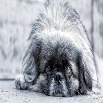 Dog Puppy Live Wallpapers apk screenshot