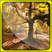 Leaves Autumn Live Wallpapers icon