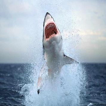 Shark Great Live Wallpapers apk screenshot
