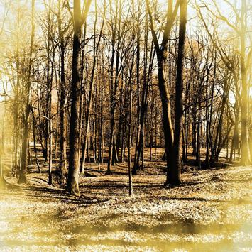 Tree Woods Wallpapers apk screenshot