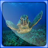 Turtle Great Live Wallpapers icon