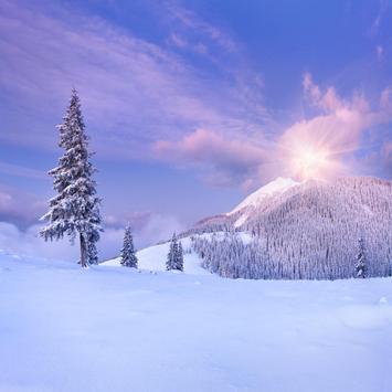 Winter Snow Live Wallpapers apk screenshot