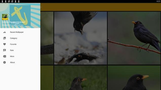Common Blackbird Wallpaper screenshot 7