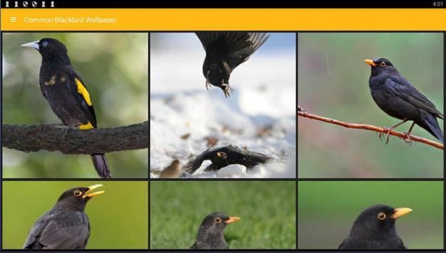 Common Blackbird Wallpaper screenshot 5