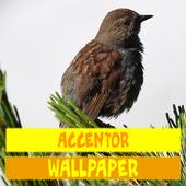 Accentor Birds Wallpaper icon
