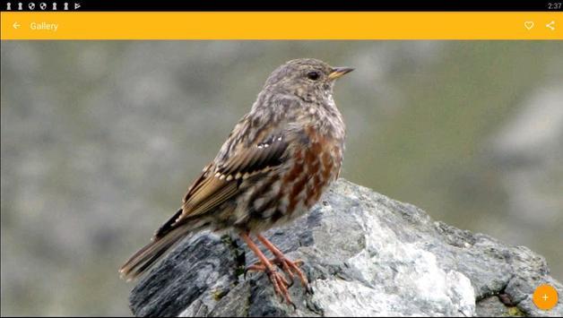 Accentor Birds Wallpaper screenshot 4