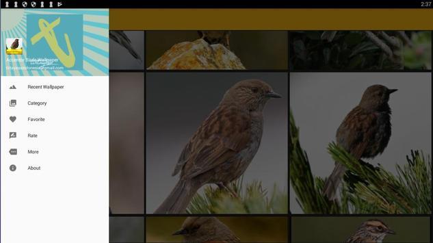 Accentor Birds Wallpaper screenshot 8