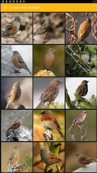 Accentor Birds Wallpaper poster