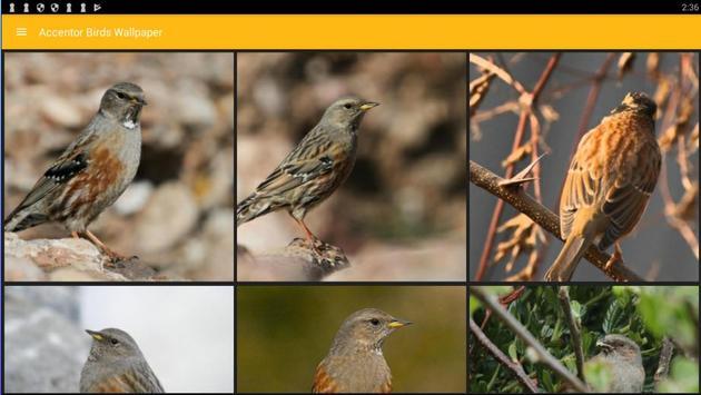 Accentor Birds Wallpaper screenshot 3