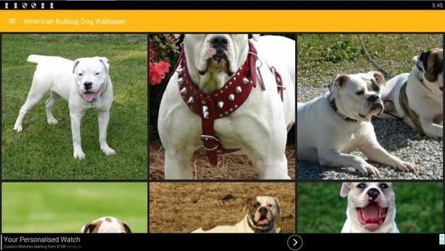 ... American Bulldog Wallpapers apk screenshot ...
