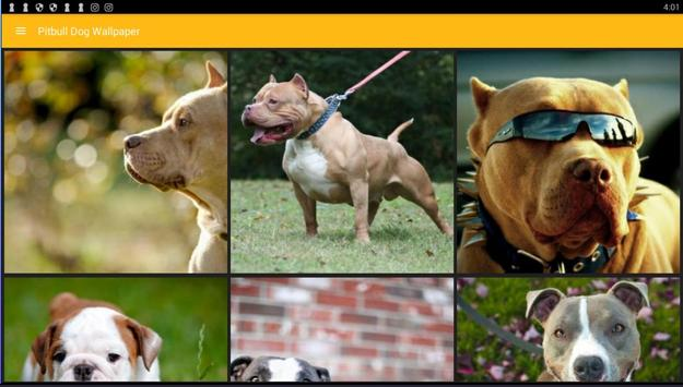 American Pitbull Terrier Dog Wallpaper Apk Screenshot