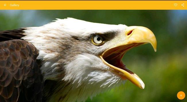 Bald eagle birds wallpaper apk bald eagle birds wallpaper apk voltagebd Image collections