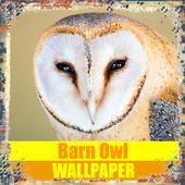 Barn Owl Birds Wallpaper icon