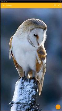 Barn Owl Birds Wallpaper screenshot 2