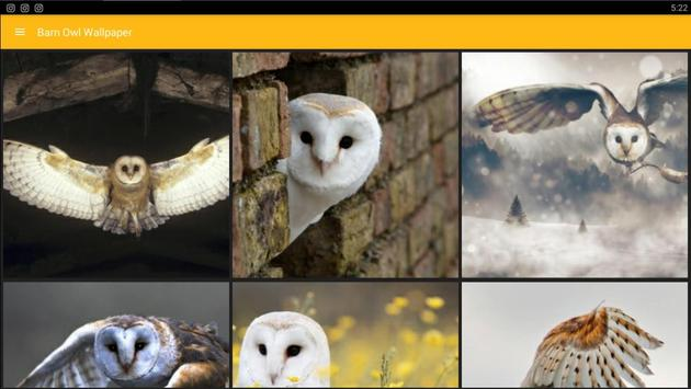 Barn Owl Birds Wallpaper screenshot 3