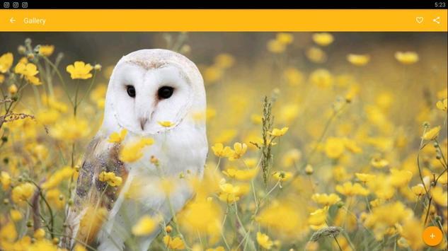 Barn Owl Birds Wallpaper screenshot 7