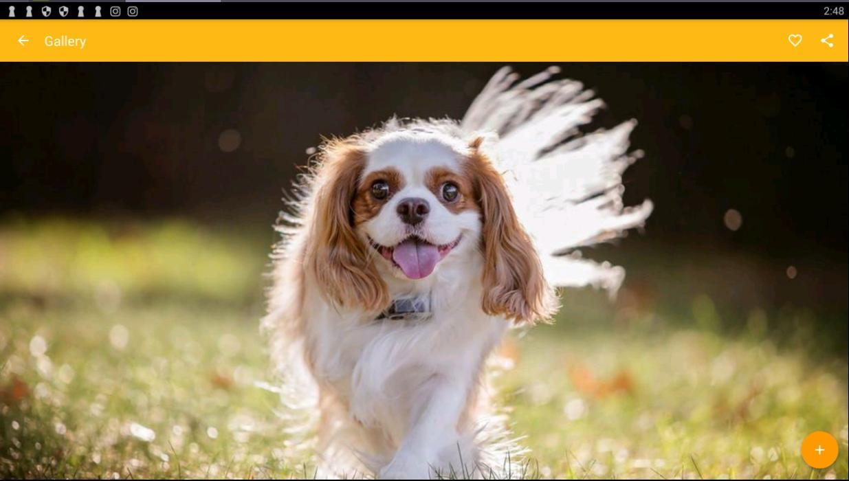 Cavalier King Charles Spaniel Dog Wallpaper For Android Apk Download