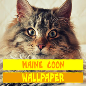 Maine Coon Cat Wallpaper icon