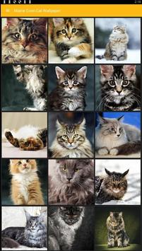 Maine Coon Cat Wallpaper poster