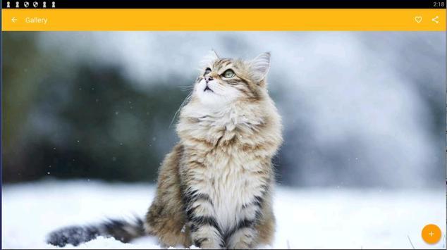 Maine Coon Cat Wallpaper screenshot 4