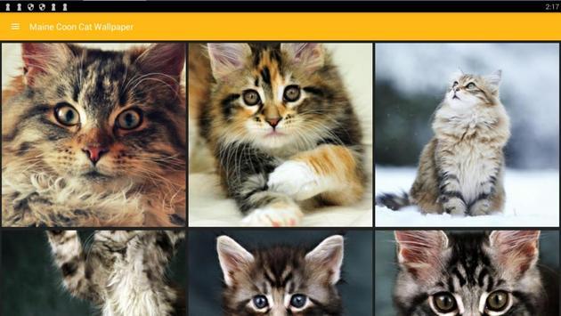 Maine Coon Cat Wallpaper screenshot 6