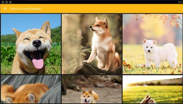 Shiba Inu Dog Wallpaper Apk Screenshot