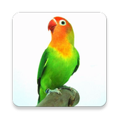 Kicau Lovebird icon