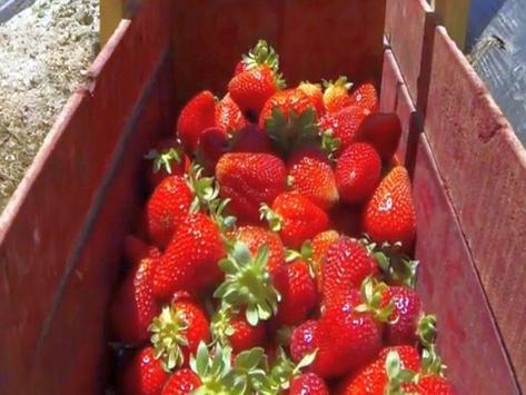 Fruit Puzzle! apk screenshot