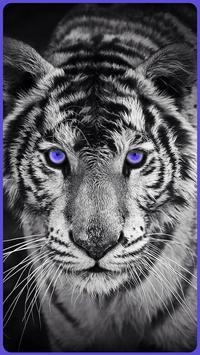 HD Amazing Wallpapers - Tiger apk screenshot