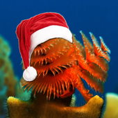 Christmas Underwater HD icon