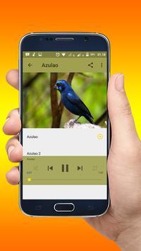 Canto Fêmea de Azulão New apk screenshot