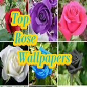 Top Rose Wallpapers icon