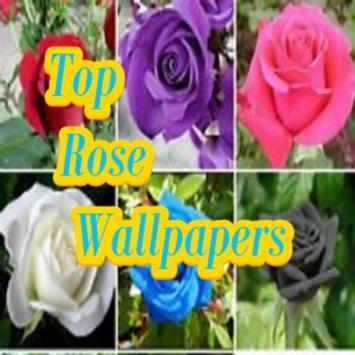 Top Rose Wallpapers screenshot 3