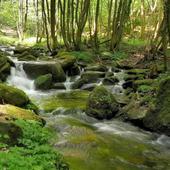 Beautiful brook in greenery icon
