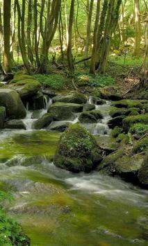 Beautiful brook in greenery poster