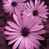 Beautiful flowers on violet icon