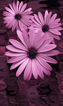 Beautiful flowers on violet poster
