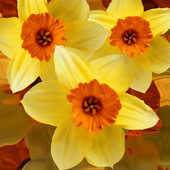Beautiful flowers on yellow icon