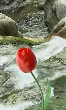 Beautiful tulip and brook apk screenshot