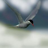 Graceful birds flying icon