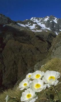 Flower in the mountains poster