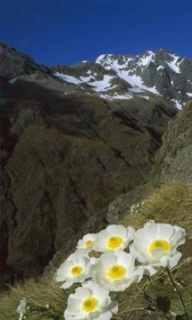 Flower in the mountains screenshot 1