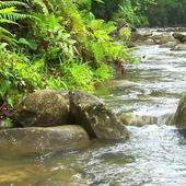 Movement mountain river icon