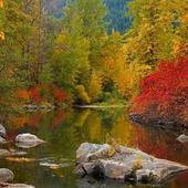 Magic forest lake icon